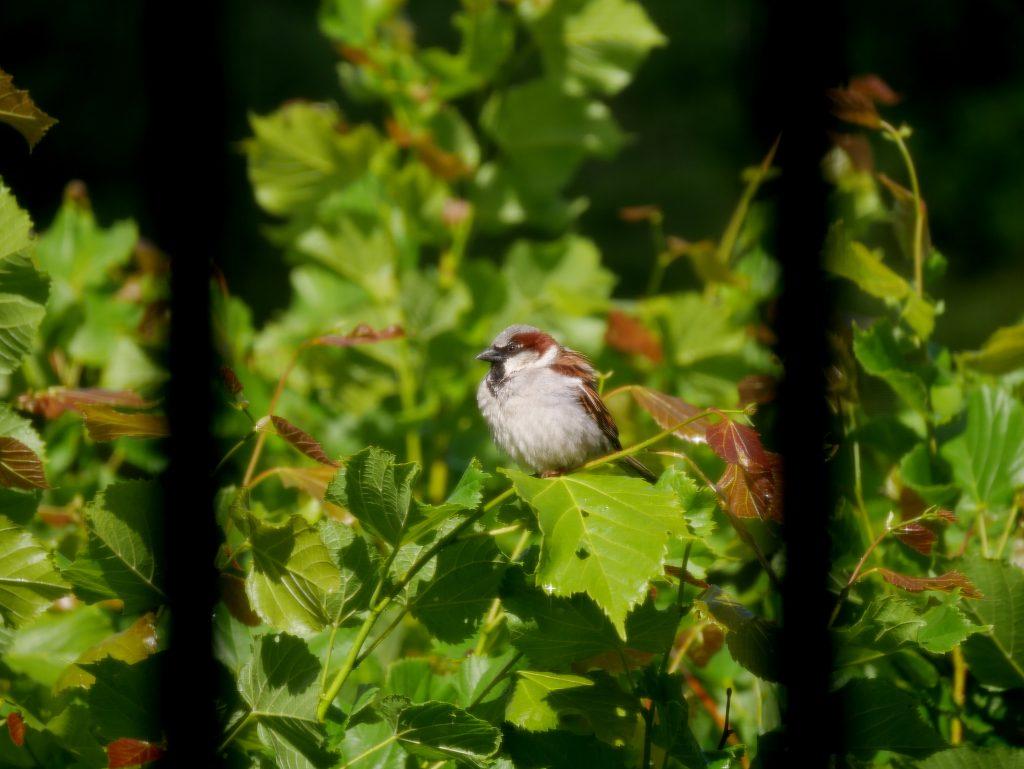 Kleiner Vogel im Grünen